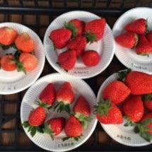 苺11品種食べ比べ_…