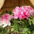 筥崎宮 花庭園 冬ぼ…