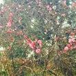 梅の花が咲いていまし…