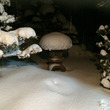 今日も大雪