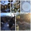 霜の朝 ・:,。* …