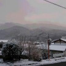 雪降りました! さて…