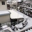 雪だるま♬ 大阪積雪…