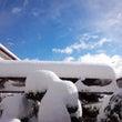 積雪13㎝って…♪