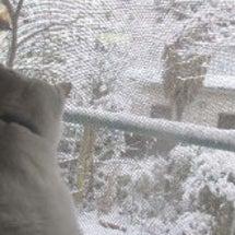 【猫日記】白にゃ、雪…