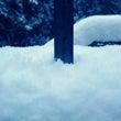 雪国 京都 積雪量