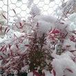 大寒波の中、島根県出…