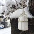 広島は大雪です