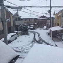 雪、積もりました