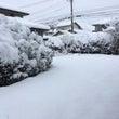 初雪は大雪!
