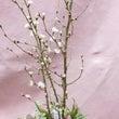桜でマンスリーレッス…