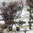 雪景色☃️