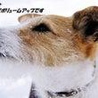 深雪の那須~ヒトも楽…
