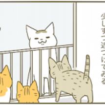 トンシノと子猫