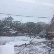 雪が降ったよ‼️