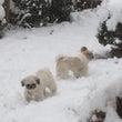 雪遊び…♪