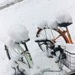 サイちゃん初めての雪