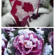 * * * 雪 * …