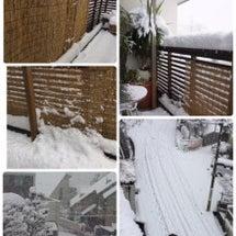ドカ雪のお山♪