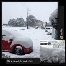 すごい積雪で今日も引…