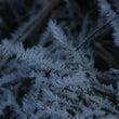 結晶する水 霜華