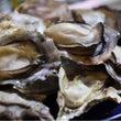 美味しい牡蠣 & 食…