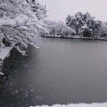 雪の為休講