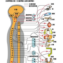 左 半身 しびれ 自律 神経 半身麻痺などを引き起こす脳梗塞の神経障害