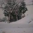 再び、雪中継!