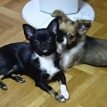 ベガ&ドキンちゃん