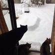最強寒波と猫