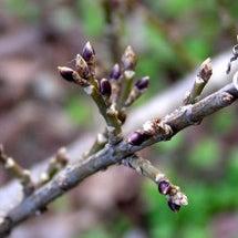 春のきざし~その2