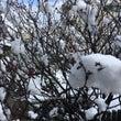 梅も耐えて春を待って…