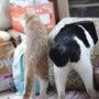 珍客と猫のしっぽ