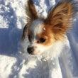 雪の中のエンジェル