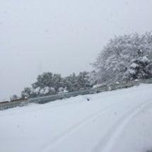 『積雪による倒木、カ…