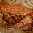 北海道産毛蟹&牡丹海…