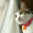 【猫動画】雪だるまと…