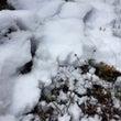続・続・大雪だよー