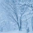 雪がシンシンと降ると…