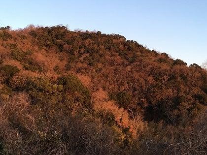 朝陽に染まる山_1