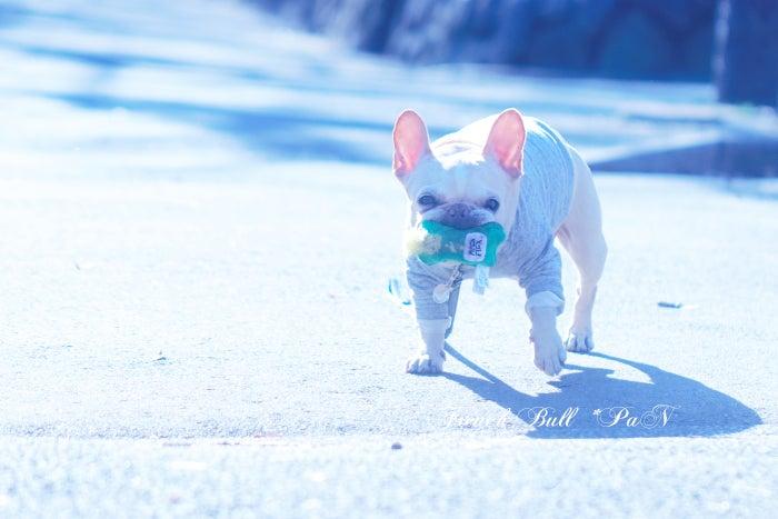駒沢公園をガチャピンとお散歩する、フレブルパン