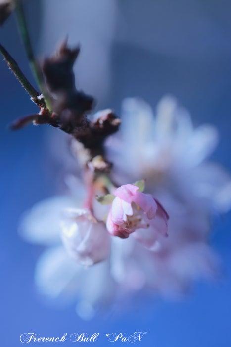 駒沢公園の梅 フレブルパン