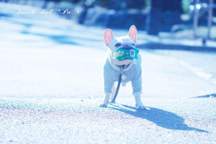 駒沢公園をガチャピンとお散歩するフレブルパン2