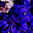 花たちの優しい命の叡…