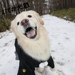 キター 雪のレジーナ…