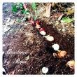 薔薇の剪定と裏庭の球…