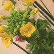 春のお花、春の香り