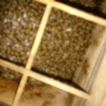 蜜蜂の内検。