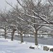 嵐山の雪景色